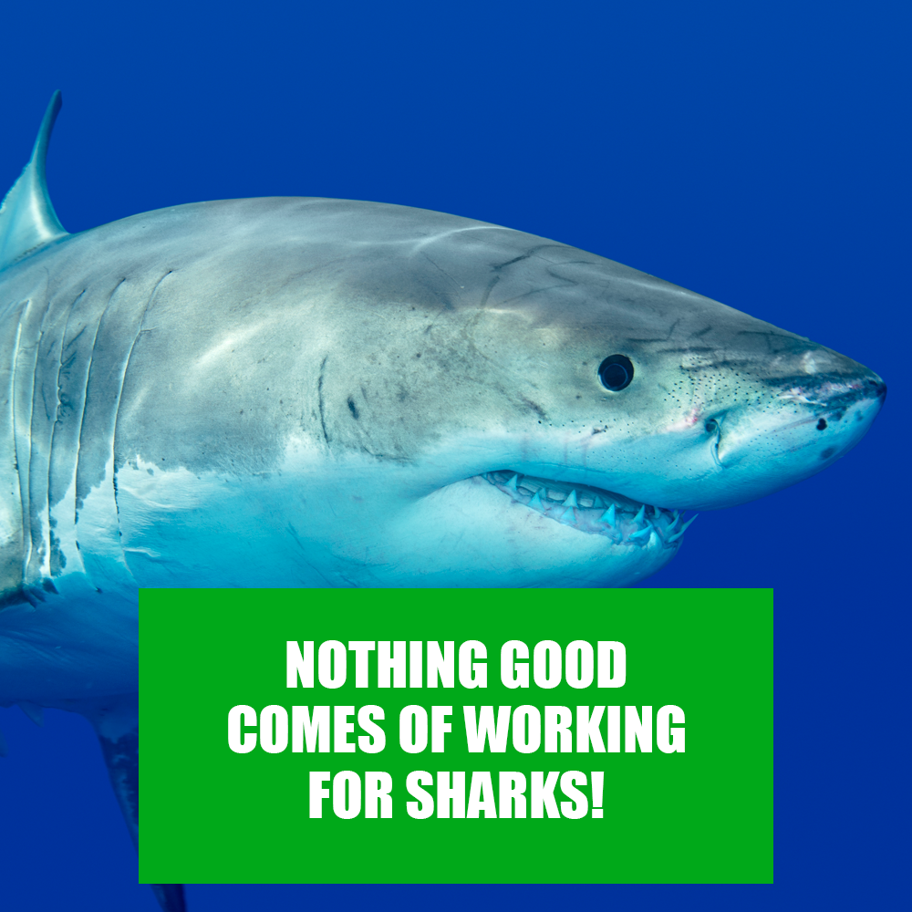 working-for-sharks